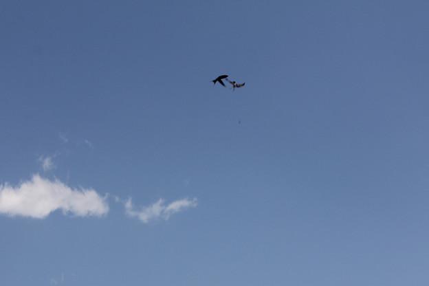 写真: 空中戦