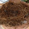 写真: 中の巣