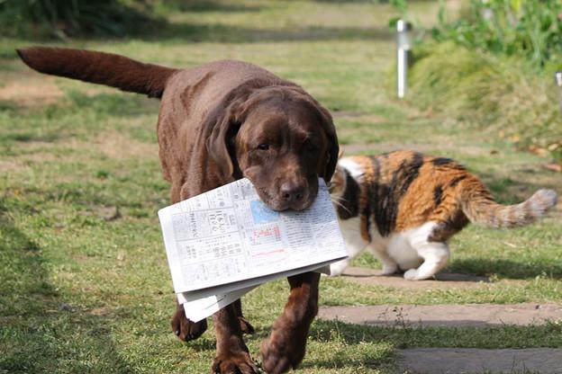 写真: 新聞運び