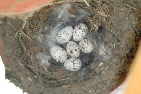 外組さんの卵
