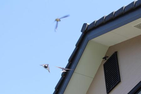 新しい巣作り見学
