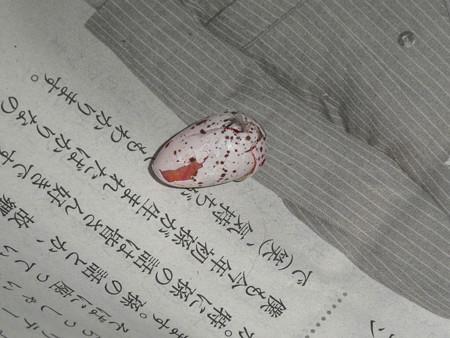 落とされていた卵