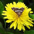 写真: 花と蛾