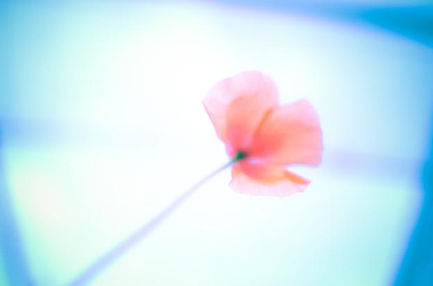 写真: P.S I...
