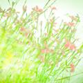 写真: あの日の光、風、香り、そっと目を閉じればいつも・・・