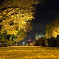 写真: 夜に堆積