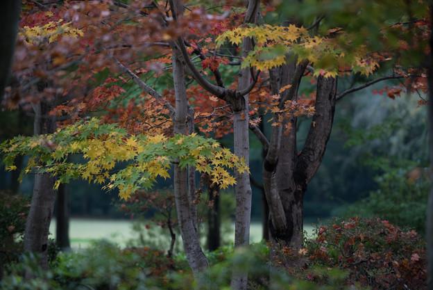 【昭和記念公園:日本庭園】5