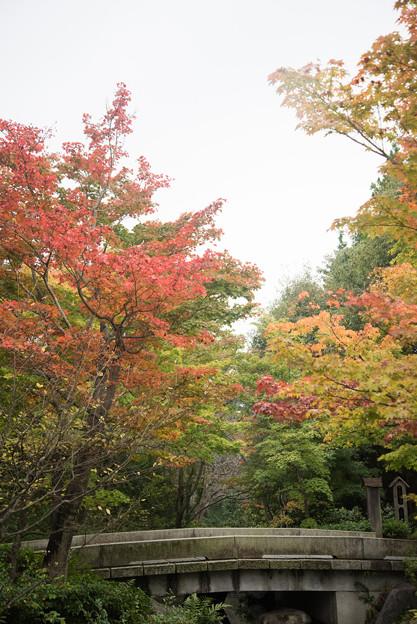 【昭和記念公園:日本庭園】9