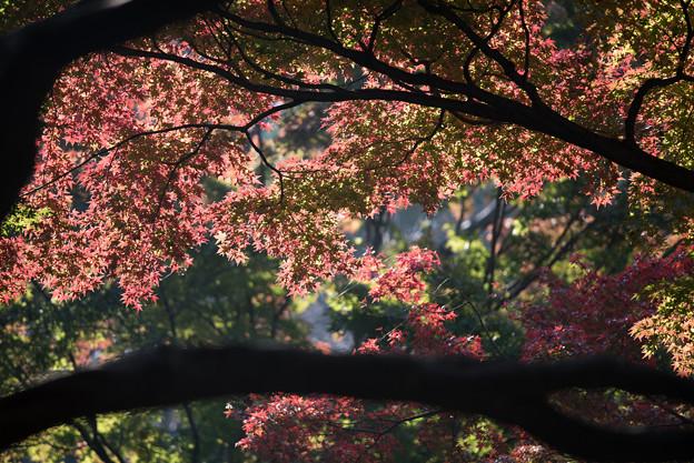 【新宿御苑(モミジ山)】5