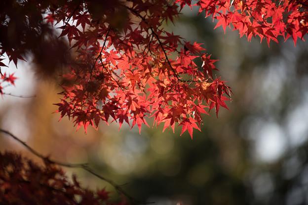 【ささぶねの道】紅葉_D3