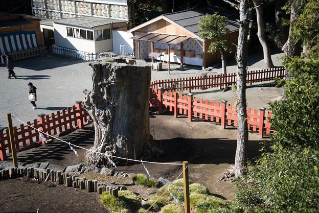 【鶴ヶ岡八幡宮(大銀杏跡)】2