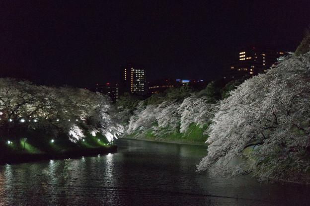 【千鳥ヶ淵の夜桜】1