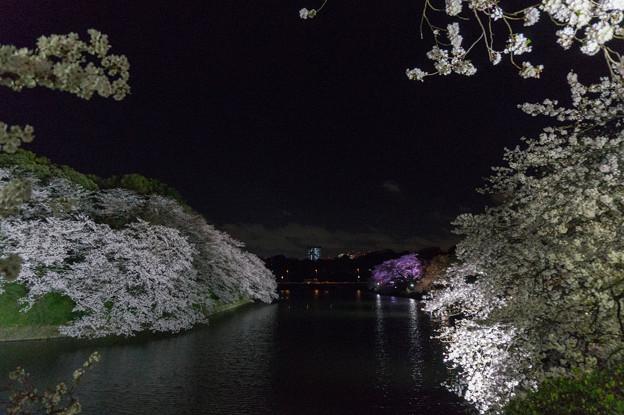 【千鳥ヶ淵の夜桜】2