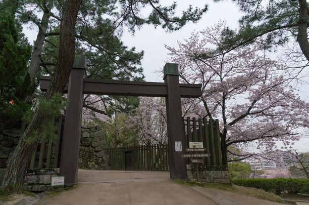 【福山城の桜】1