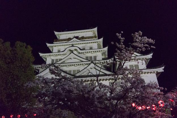 【福山城の桜】6