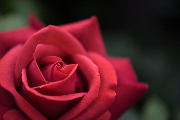 YEG【薔薇:チョコレート・プリンス】2