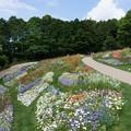 里山ガーデン【花畑】1