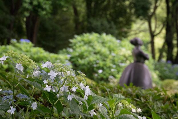 昭和記念公園【花木園あじさいロードの紫陽花】3