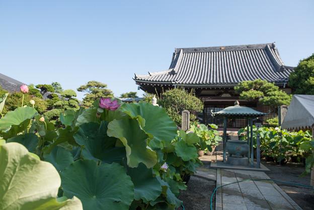 【松雲山要法寺の庭】