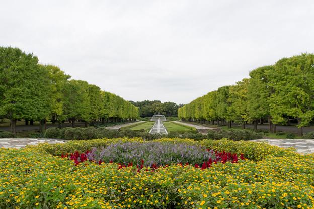 昭和記念公園【カナール】
