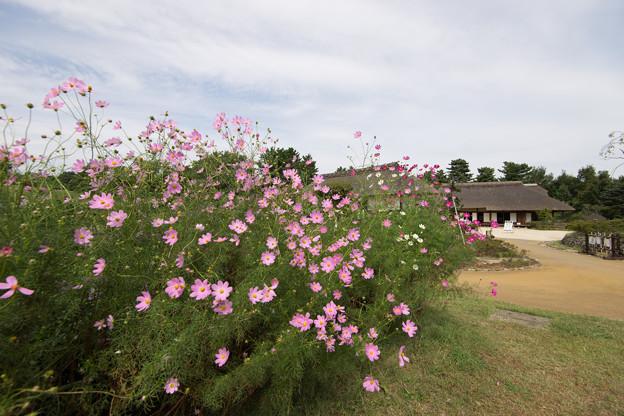昭和記念公園【こもれびの里の様子】1