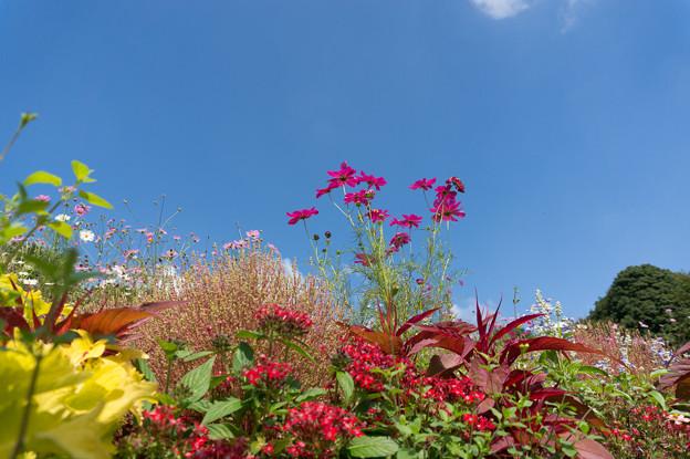 【青空と里山ガーデンの大花壇】6