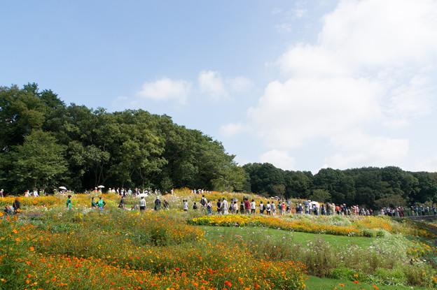 【青空と里山ガーデンの大花壇】7