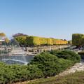 Photos: 昭和記念公園【カナールのイチョウ】4