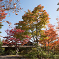 昭和記念公園【日本庭園の紅葉】1-1