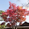 Photos: 昭和記念公園【日本庭園の紅葉】1-2