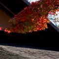 昭和記念公園【日本庭園の紅葉】1-4