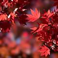 Photos: 昭和記念公園【日本庭園の紅葉】3-3