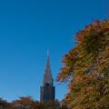 新宿御苑【タムケヤマ】1