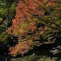 Photos: 【小石川後楽園の紅葉】4
