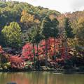薬師池公園【薬師池の紅葉】4