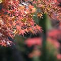 薬師池公園【旧荻野家の景色】7