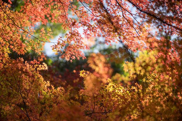小石川後楽園【小盧山付近の紅葉】7