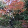 旧古河庭園【日本風の庭園】1