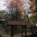 旧古河庭園【日本風の庭園】5