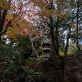 旧古河庭園【日本風の庭園】6
