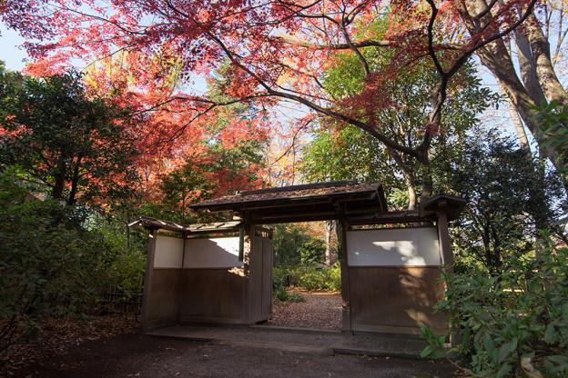 六義園【紅葉:宣春亭の門のところ】