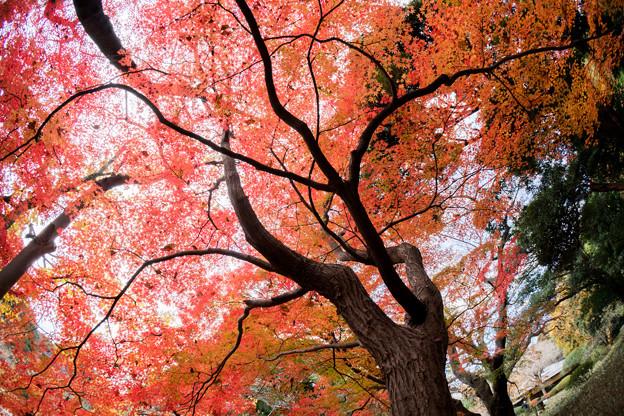 新宿御苑【上の池あたりの紅葉】2