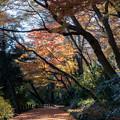 新宿御苑【下の池付近の紅葉】2
