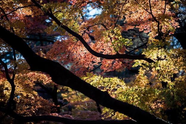 新宿御苑【下の池付近の紅葉】5