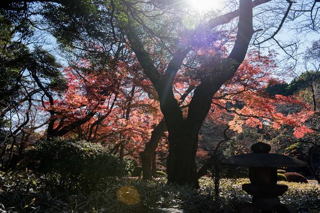 新宿御苑【上の池付近の紅葉】1