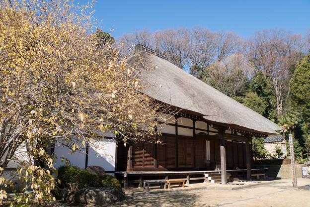 【西方寺の茅葺きの本堂と蝋梅】