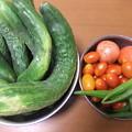 家庭菜園のキュウリとトマト、オクラ