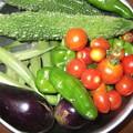 写真: 家庭菜園で採れたオクラ、ピーマン、茄子、ゴーヤ、ミニトマト