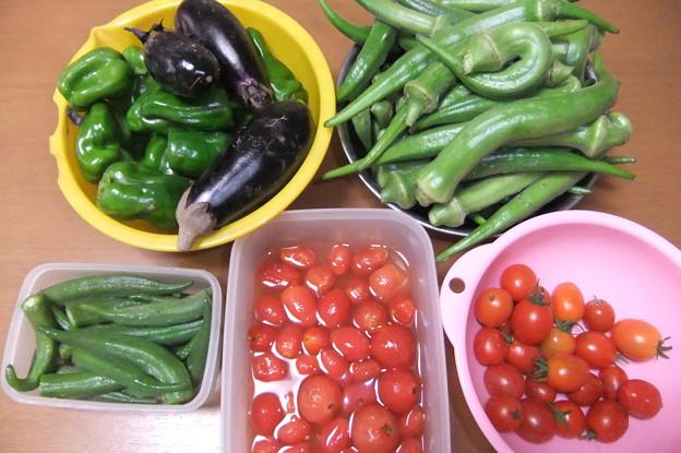 家庭菜園で採れた野菜
