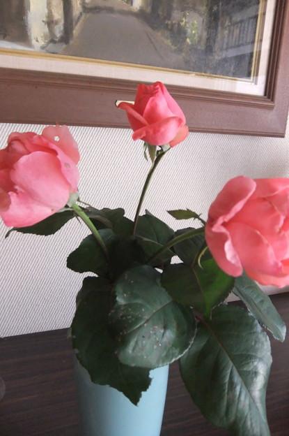 家庭菜園の薔薇